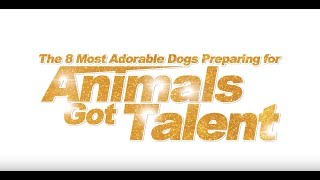 8 Most Adorable Dogs Preparing For Animals Got Talent