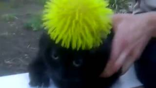 шапка для кота