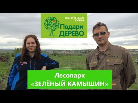 Лесопарк «Зелёный Камышин» и экологический проект «Подари ДЕРЕВО»: КРЫМСКАЯ СОСНА