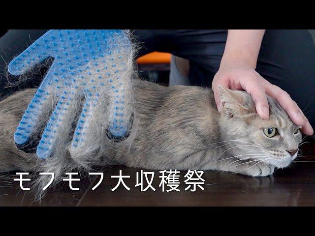 モフモフハンドと箱入り猫娘 | #モアクリ Vlog051