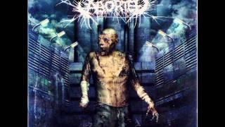 Aborted - The Chondrin Enigma HD Lyrics
