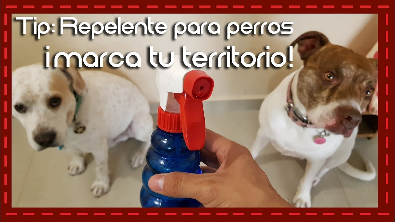 Tip Repelente Para Perros Marca Tu Territorio L Repellent For Dogs Youtube