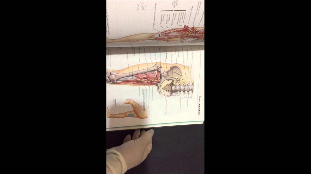 Compre Agora: Atlas de Anatomia Humana - YouTube