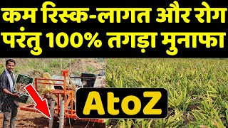 हल्दी की खेती कब और कैसे की जाती है🤔Turmeric Farming Profit Per Acre | Turmeric Cultivation