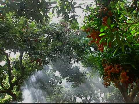果香風華-臺灣的水果The Fragrant Fruits of Taiwan #1
