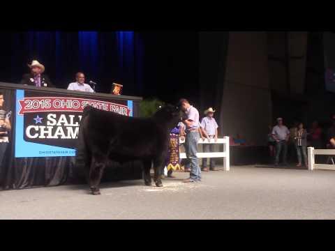 2015 Ohio State Fair Sale of Champions - Grand Champion Steer