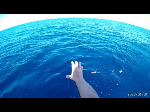 pesca de atunes alistados en cadiz 2017