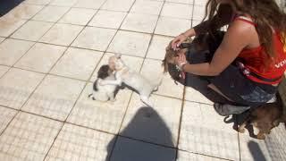 Puppies T video