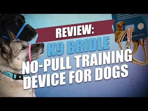 Review: K9 Bridle No-Pull Training Device for Dogs