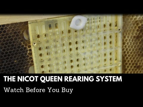 Why I HATE The Nicot Queen Rearing System Part 1
