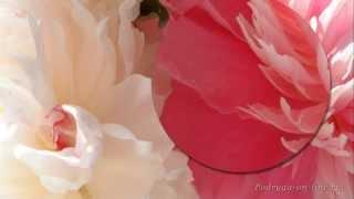 Самая красивая музыка для Души и пионы. Саксофон.Трубач.Peony flowers. Podryga-on-line.ru