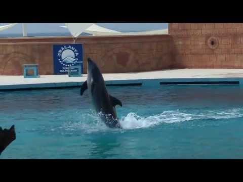 SEALANYA Дельфин-шоу