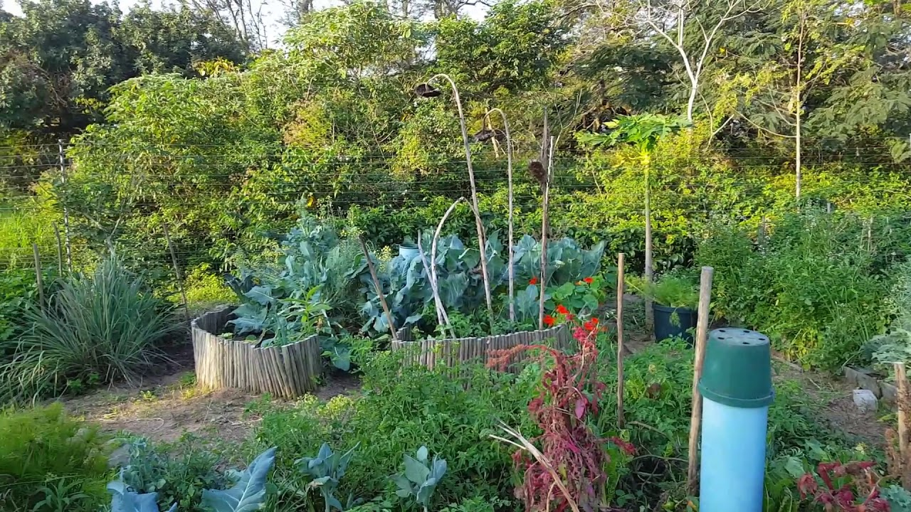 our first permaculture designed food garden youtube