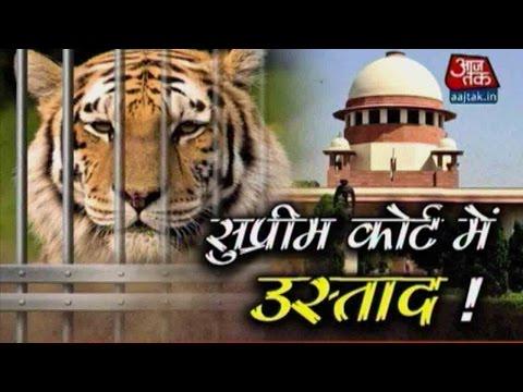 Vardaat: SC Sends Ranthambore's 'Man-eater' Tiger Ustad (T24) In Lifelong Captivity