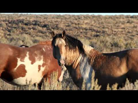 MUSTANGS of our WILD WEST October 2017