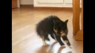Смешной маленький котенок
