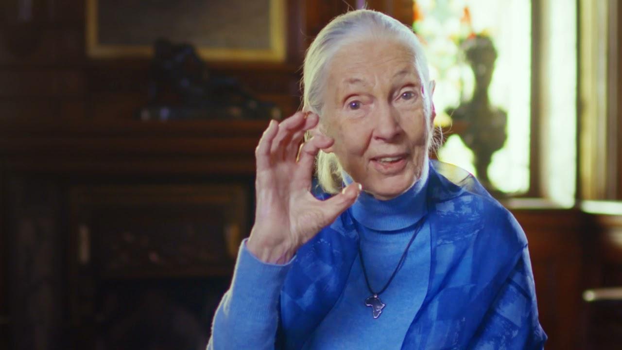 2021 Templeton Prize - Dr. Jane Goodall - Music by Tom E Morrison