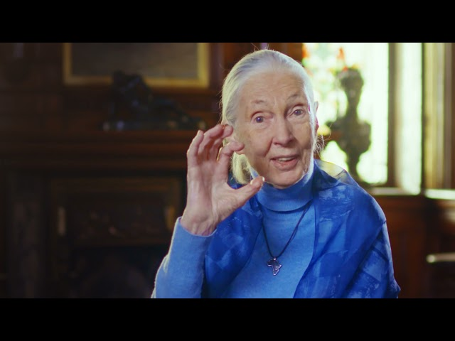 Jane Goodall: Living a Life of Purpose | 2021 Templeton Prize