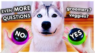 Dog Answers EVEN MORE Fan Questions Using Talking Buttons!
