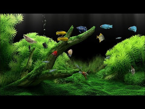 Relaxing Fishtank (Dream Aquarium) Full-HD