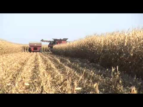 PAYDAY! - Corn Harvest 2014