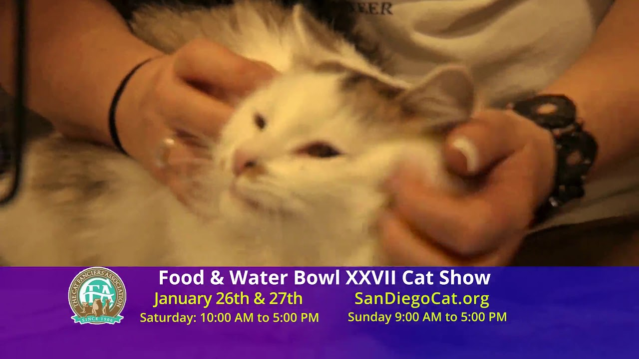 San Diego Cat Show January 25 - 26, 2020