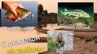 Русская Рыбалка Installsoft Edition 3.7.6 Ахтуба- Триада: Краснопёрка, Осётр русский, Рак