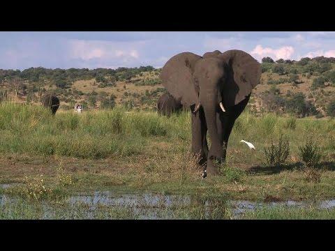 Botswana's Marauding Elephants Trigger Hunting Ban Debate