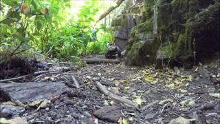 Axial SCX10 Jeep Rubicon G-6 Trailing Cedar Creek 9 20 2014