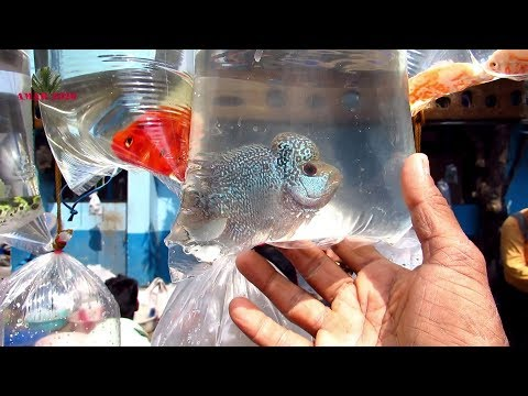 AQUARIUM FISH PRICE AT GALIFF STREET PET MARKET KOLKATA WEST BENGAL | 16TH FEBRUARY 2020 VISIT