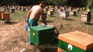 пчела карника