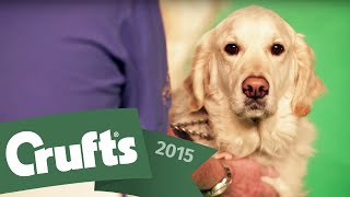 Behind The Scenes With The Southern Golden Retriever Display Team | Crufts 2015