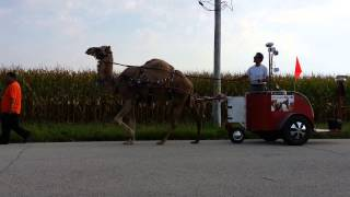 Call 815-600-6464-Animal Rental,Animal Rentals,Chicago Camel Guy 3,Camel Rental,Camel Rides,Chicago