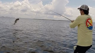 Tampa Bay Tarpon on Light Line