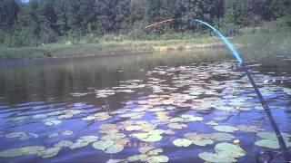 Ловля некрупной щуки в кувшинках с лодки на блесну незацепляйку атом rybachil.ru видео