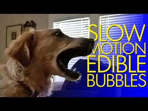 Bork with Slow-Motion Edible Bubbles (240→60fps)