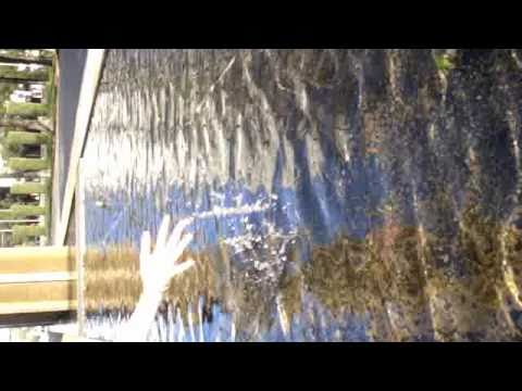 White Hinterland - Icarus - Music Video