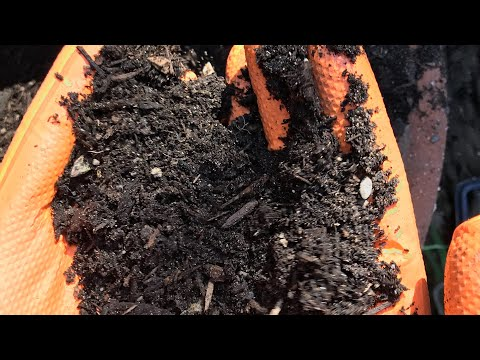 Making Compost Soil with Kitchen waste