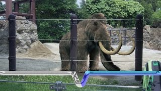The Extinction And Resurrection Of The Woolly Mammoth