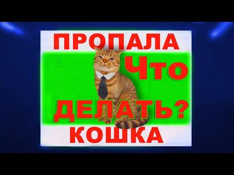 Пропала кошка что делать? - Как найти кота - 11 советов!