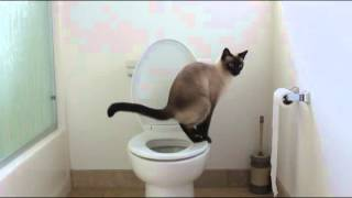 Cat uses toilet - no more kitty litter!
