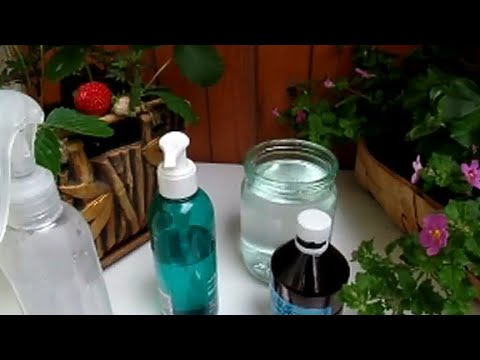 ТЛЯ Как избавиться от тли на клубнике и розах. ПЕРЕКИСЬ ВОДОРОДА в помощь растениям.