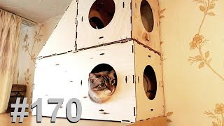 Собираем блочный домик для кошек