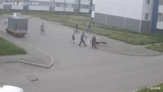 Домашние VS Бездомные. Жесткая драка собак в Иркутске