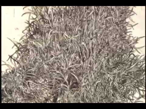 KQED Spark - Don Ed Hardy