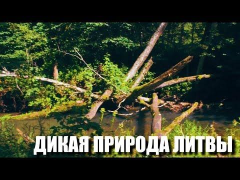 ДИКАЯ ПРИРОДА ЛИТВЫ / ХРАМ ЯЗЫЧНИКОВ / МОНАСТЫРЬ / ANTALIEPTE