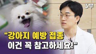 동물병원 수의사가 말해주는 강아지 예방 접종