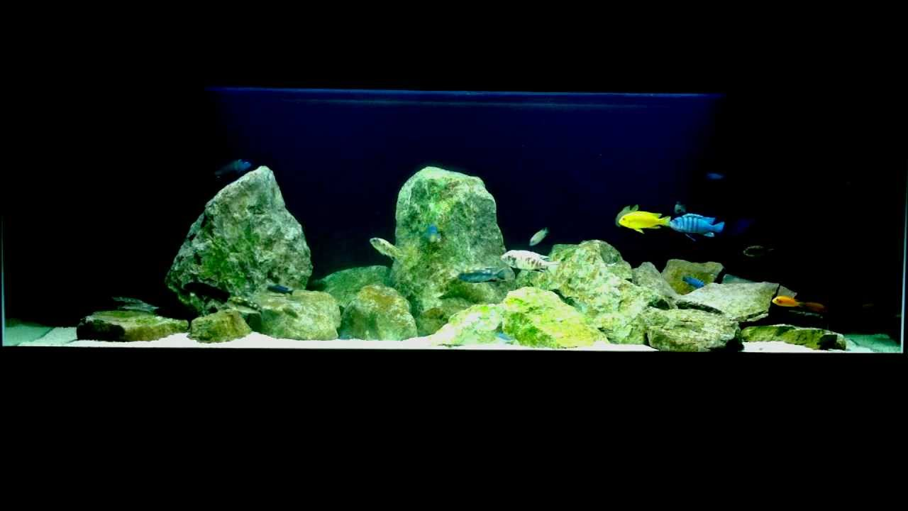 Mbuna biotope 600l lake malawi cichlid aquarium tank for Aquarium 600l