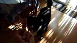 Собака не любит смотреть на средний палец [lolx.ru]