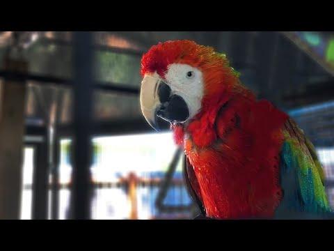 Morgan's First Outdoor Shower! | Parrot Aviaries